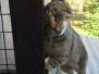 [19.7.2014] Kočičky a jejich život u nás