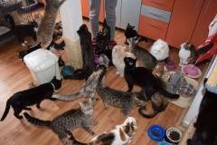 Nedělní příprava oběda s kočičími asistenty.