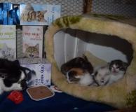 Milenka a koťátka  s dárkem.