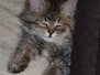 [8.8.2018] Spící kočky